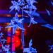 Christmas Glow RHS Wisley 02 December 2017 (26)
