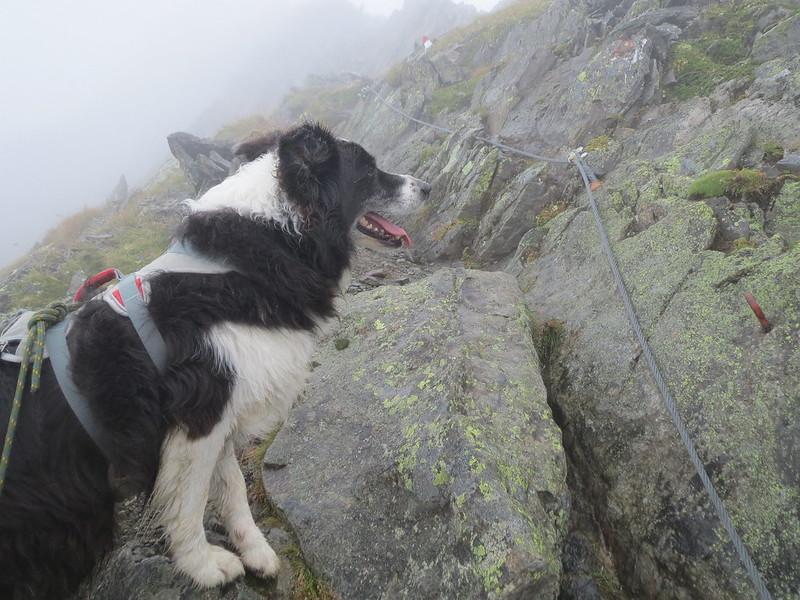 Bergwandelen met hond