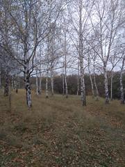 Ботанічний сад)