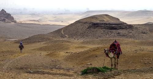 egypt camel sand desert giza gizeh pyramid landscape