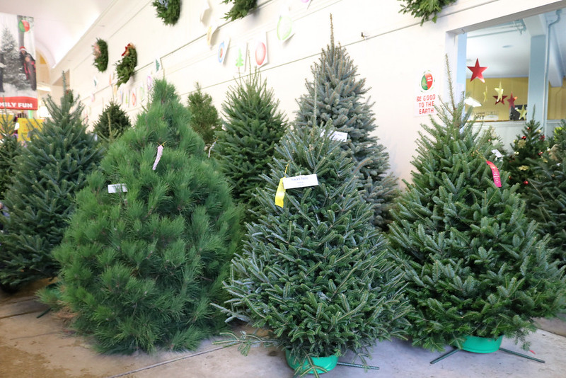 many different types of Christmas trees with award ribbons