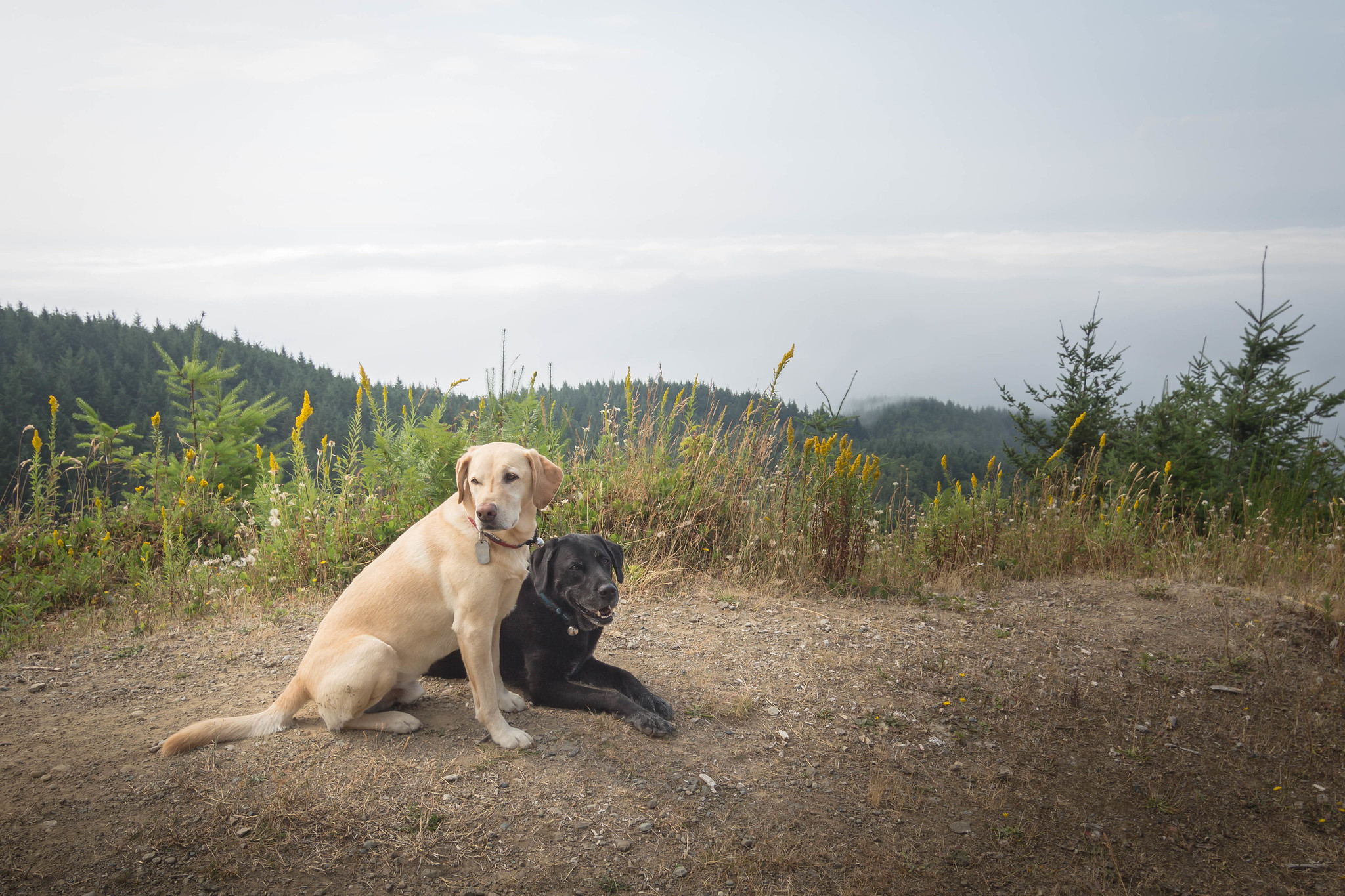 Summit dogs on West Tiger #1