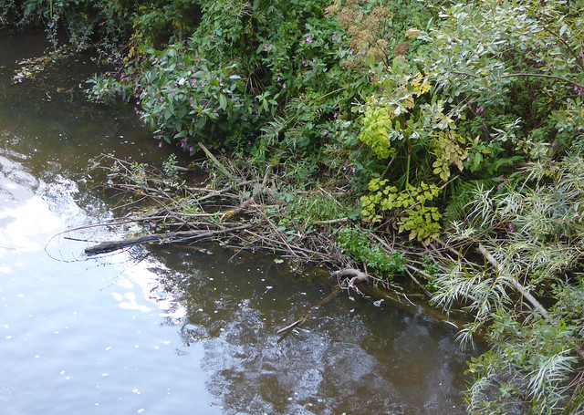 Beaver Lodge on river Otter