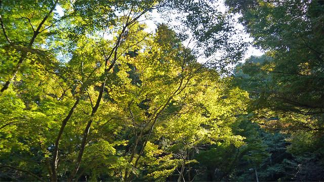油山市民の森④