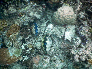 Opal Reef snorkelling on the Great Barrier Reef � clams