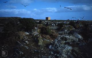 Cormorants, gulls and terns, Robben Island