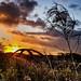 Sutton Weaver Sunset