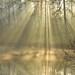 Light Rays At Tarn Hows