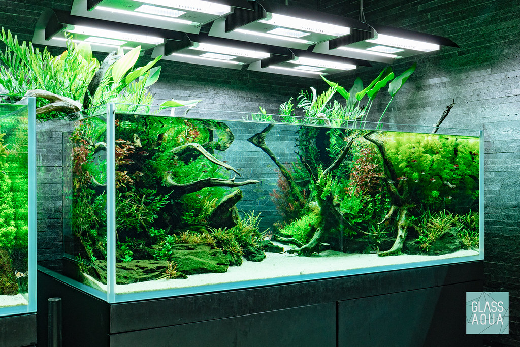 Tokyo Sumida Nature Aquarium By Takashi Amano | Glass Aqua ...