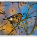 Autumn at the Arboretum-8496