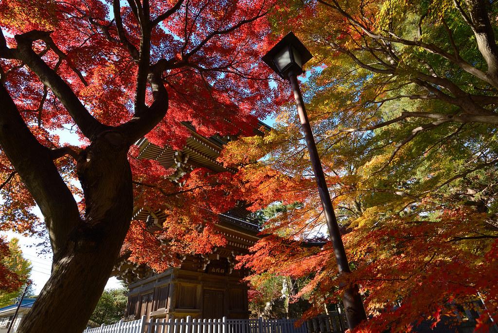 Dojo-ji Temple in autumn.  道場寺の紅葉