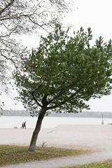 Leaning tree