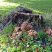 101116-fungus-04