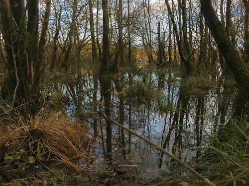 landscape ireland reflections swamp water