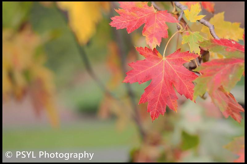 Autumn colours in Ottawa