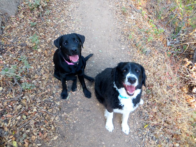 happy hikers