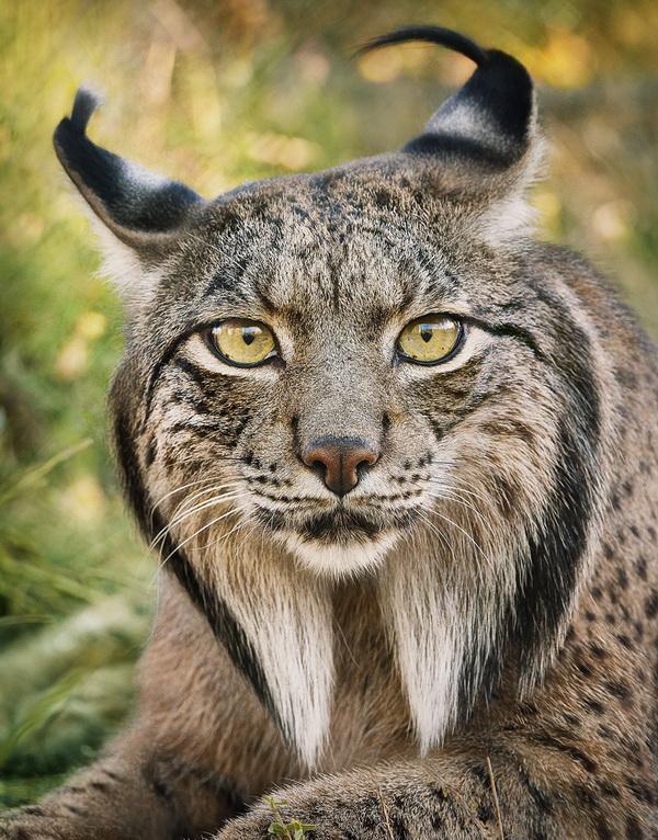 21 bức ảnh về động vật hoang dã của Tim Flach