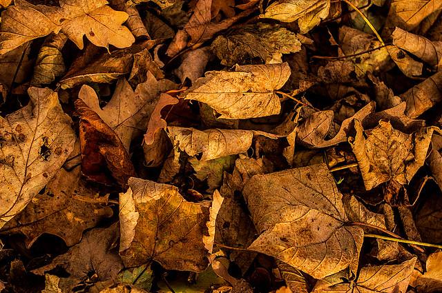 Depth of Autumn