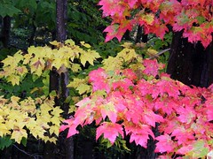 Pink and Yellow Autumn