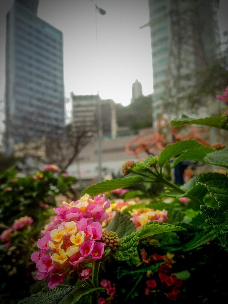 Lindas Flores Aender Flickr