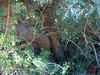 Cova Roja Biar-5
