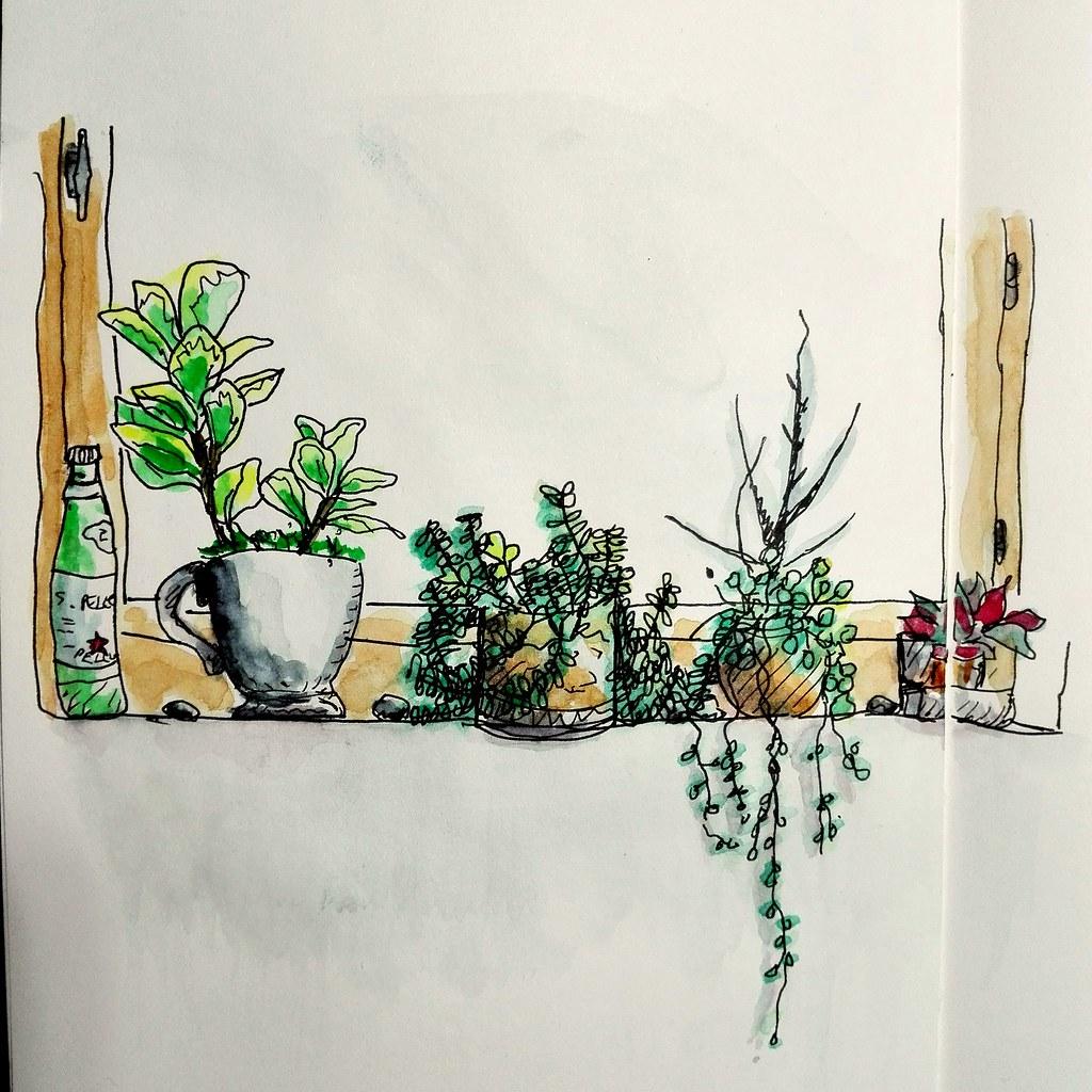 Mon petit jardin d\'intérieur...   cecile_halbert   Flickr