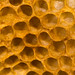 Detail of honey comb showing empty cells