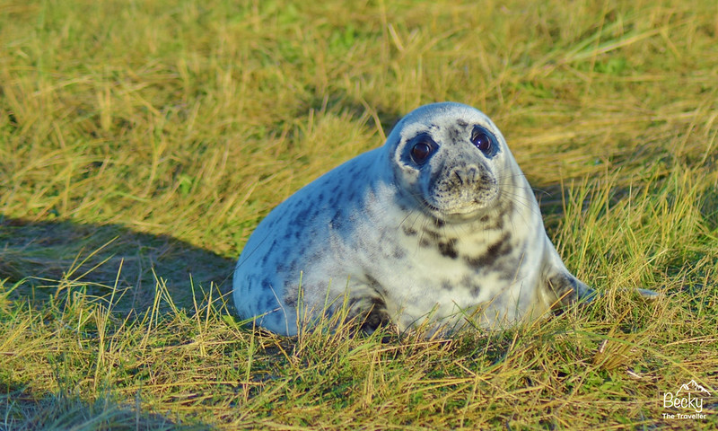 Donna Nook Nature Reserve - Lincolnshire