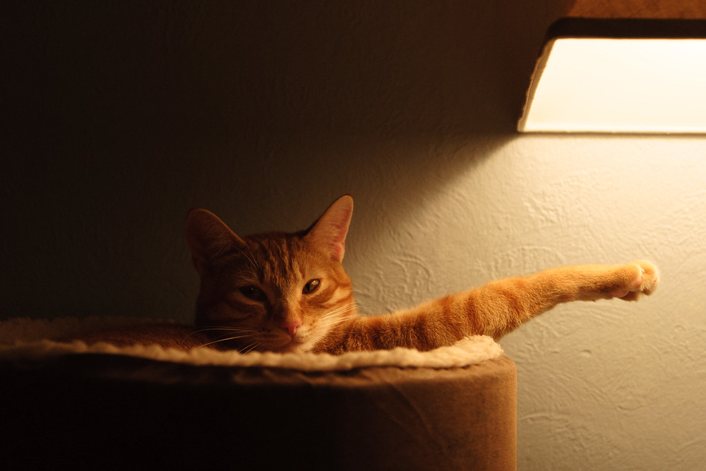 Our cat Sam relaxing in a heated cat bed with one arm sticking out towards a lamp