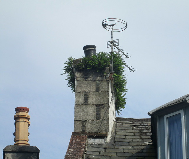 Chimney Plants, Newton Stewart