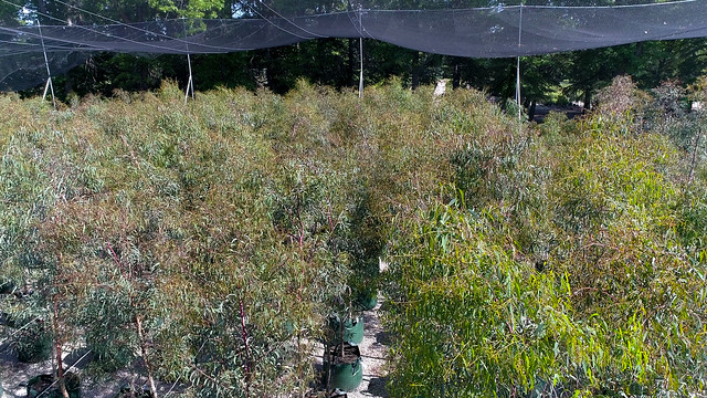LR Trees