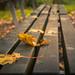 Like leaves on a bench / Comme des feuilles sur un banc...