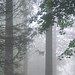 Foggy late September morning. by Mary Ann Whitney-Hall