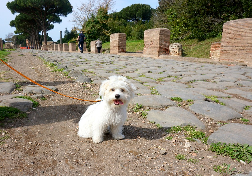 Tuisku Ostia Anticalla