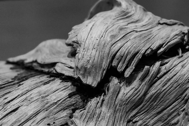 driftwood06a