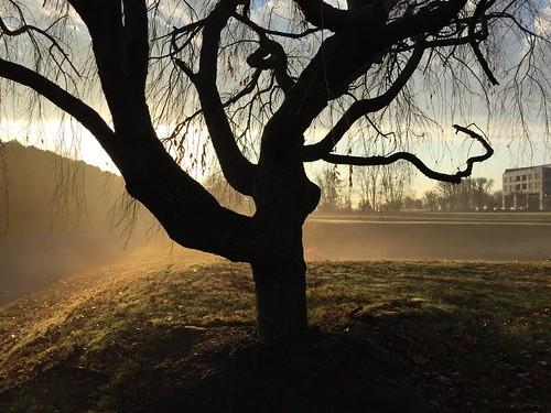 tree sunrise shadows