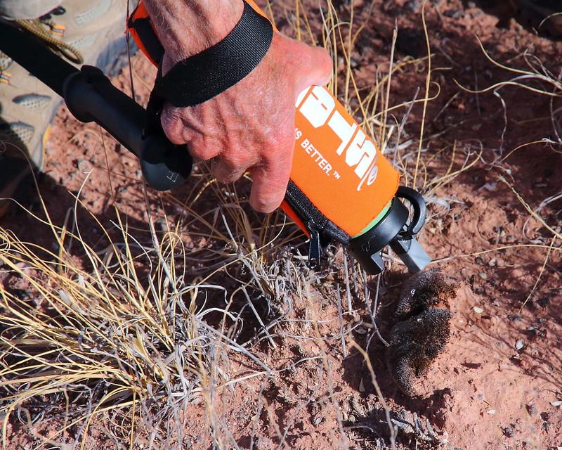 IMG_1872 Biological Soil Crust (Cryptobiotic Soil)