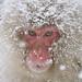 Snow Monkey by Masashi Mochida