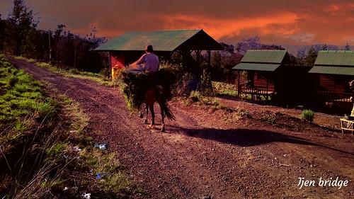 Horse man  enjoyied atmosphere of ijen Caldera when he was grassing.   more Information please check.  https://www.ijenbridge.com/ WhatsApp : +6283117730827 email : ijenbridge@gmail.com