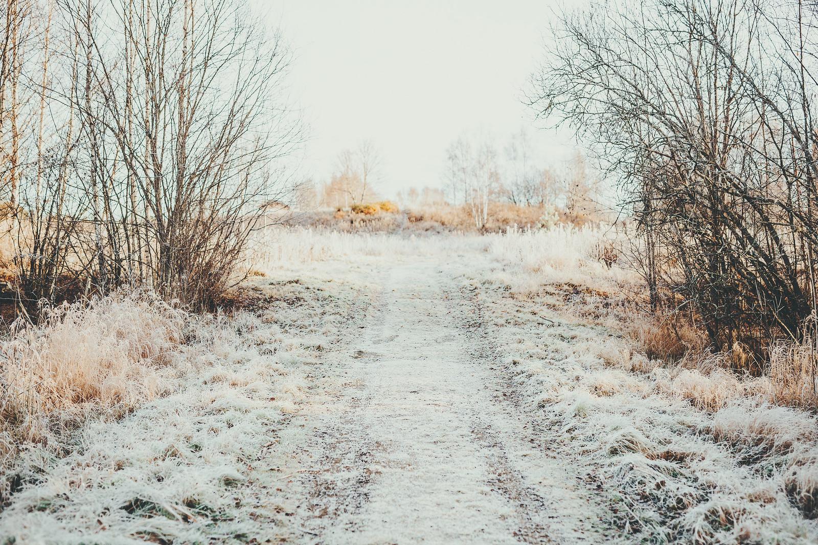 frostig morgonpromenad - karinevelina.se