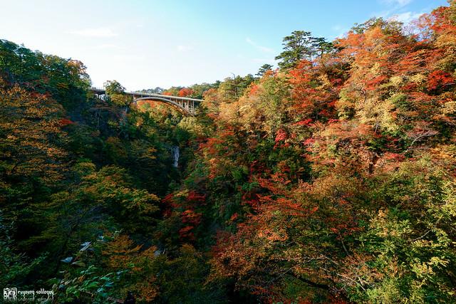 秋色是山巒中的一抹紅 | 32