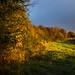 Wheatear Field Hedgerow
