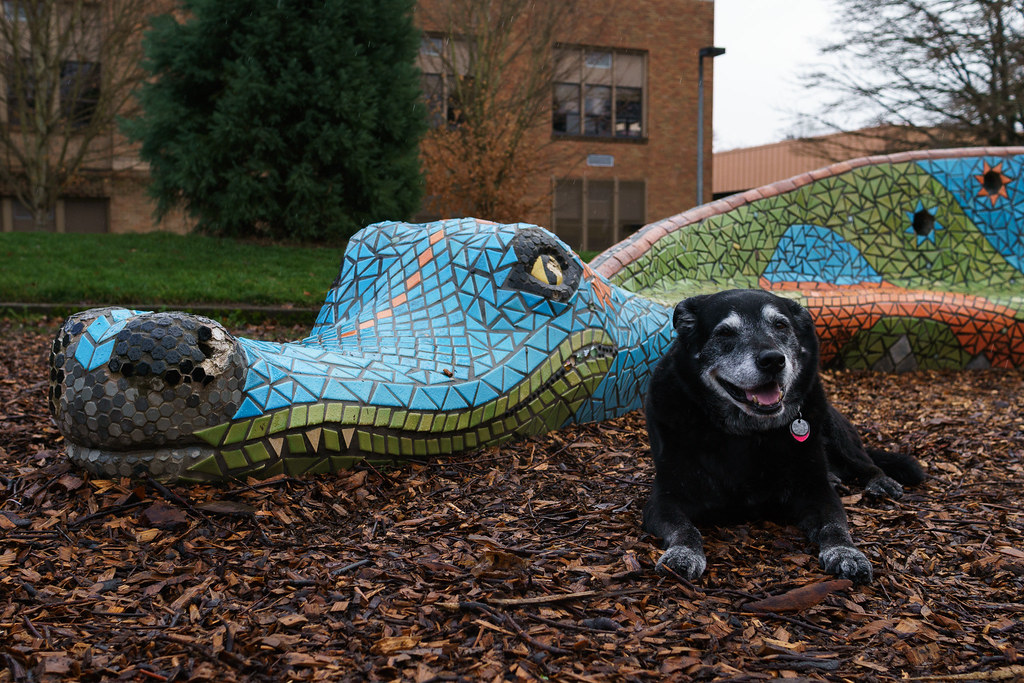 Our dog Ellie sits beside the dragon statue at Irvington School during a gentle rain shower