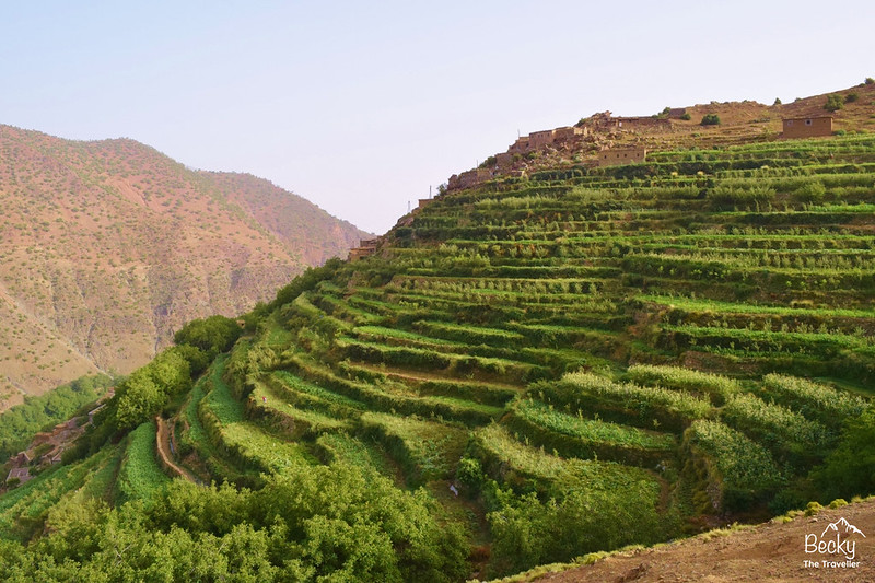 Mount Toubkal Trek - farming
