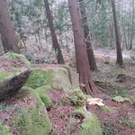 Oakmoor Wood Rocks