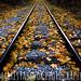fall by Mark Estabrook