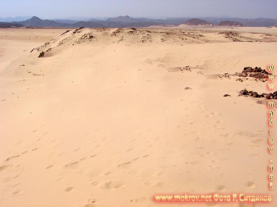 Синайская пустыня на Майне прогулки туристов