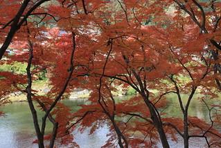 香嵐渓 紅葉真っ盛りでした。