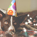 Birthday puppy <3
