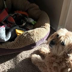 Whoops. #badmom, #dogsofinstagram